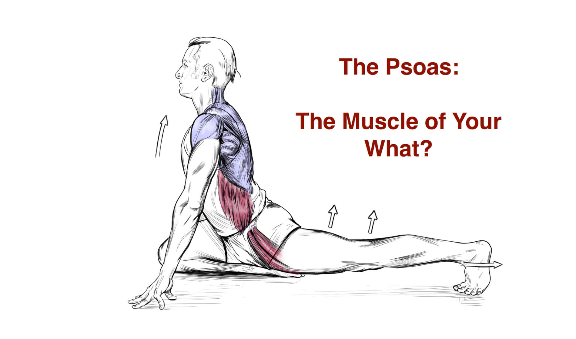 the psoas is not the muscle of your f ing soul applied yoga